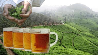 darjeeling tea post header
