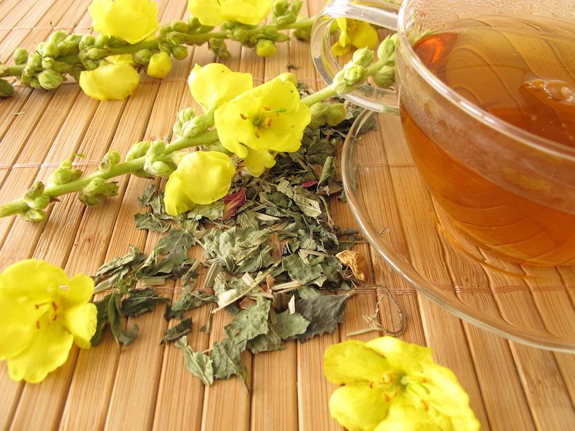 Mullein tea benefits