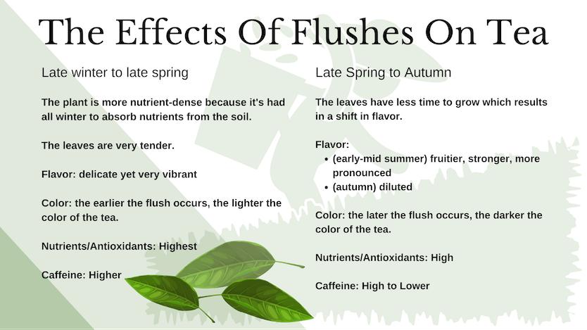 tea flushes comparison chart