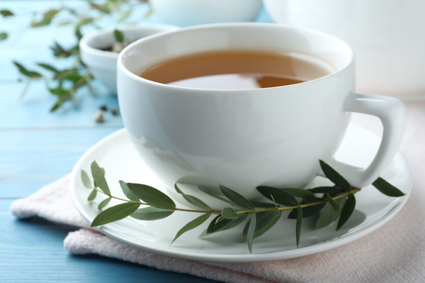 Eucalyptus tea processing