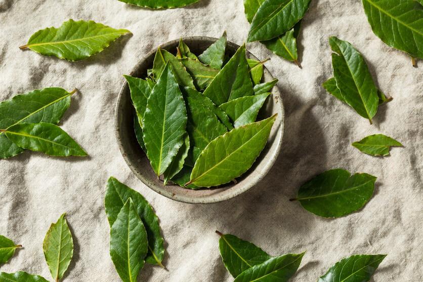 bay leaf history