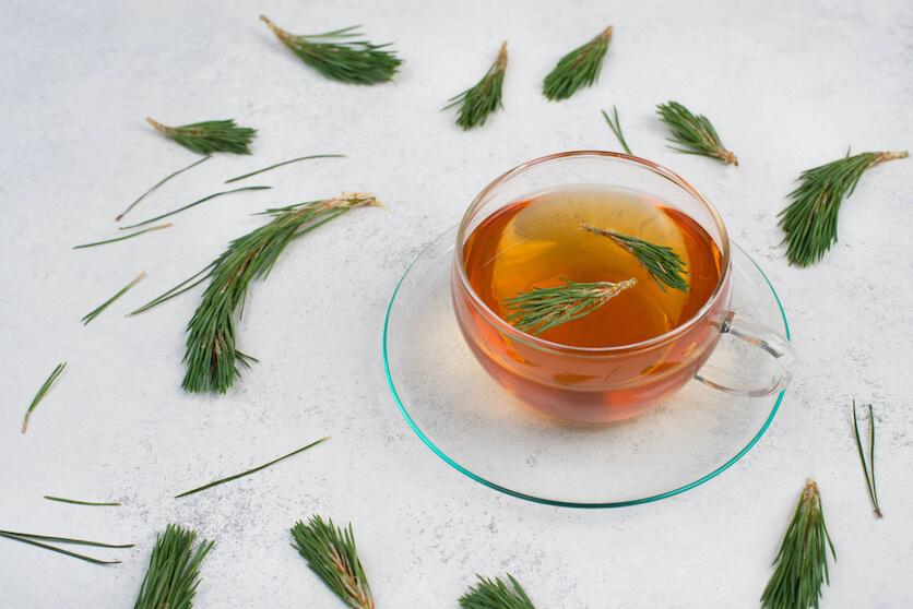 pine needle tea benefits
